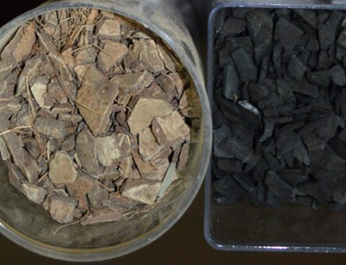 How to make coconut shell charcoal (Step by step)